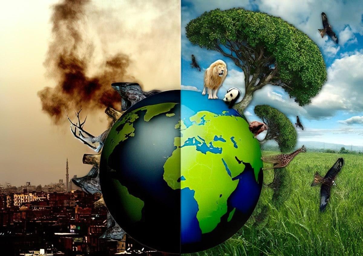 Ô nhiễm không khí đang giết dần động, thực vật