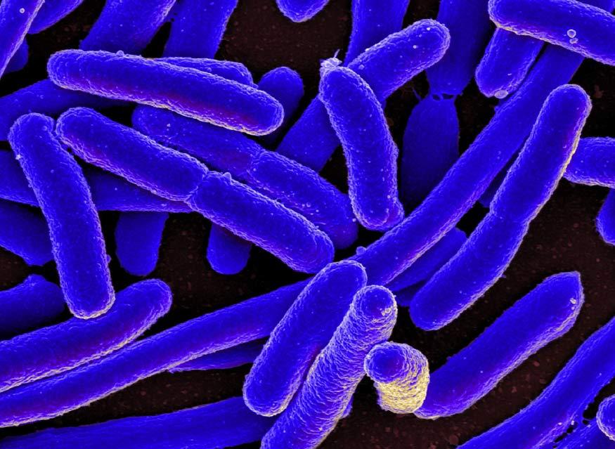 coliform là gì